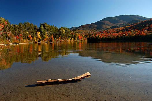 Adirondack Driftwood by Nicole Dietz
