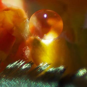 Kenneth Haley - Adoration