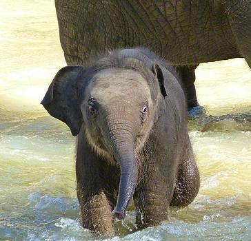 Margaret Saheed - Adventurous Baby Asian Elephant