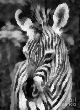 Scott B Bennett - Africa safari