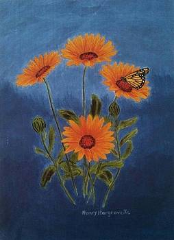 African Daisies by Henry Hargrove