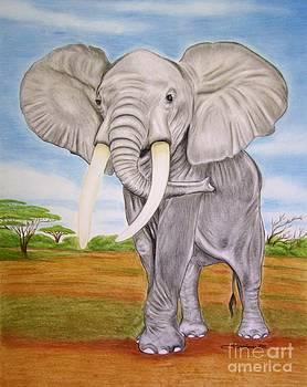 African Elephant by Barbara Pelizzoli