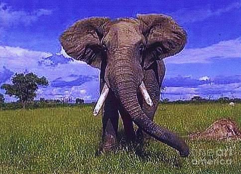 Diane Kurtz - African Elephant