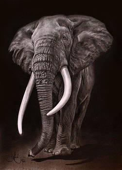 African Elephant drawing by John Harding