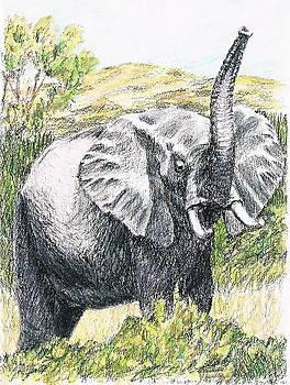 African Elephant by Joann Renner