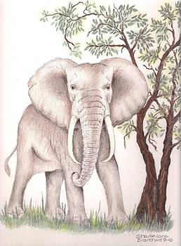 African Elephant by Sharon Blanchard