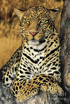 Dave Welling - African Leopard Portrait Wildlife Rescue