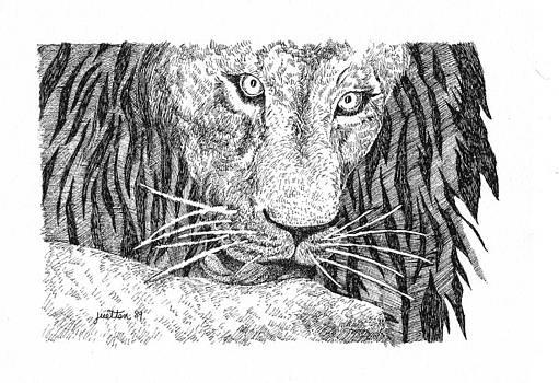 African Lion  by Barbara Lightner