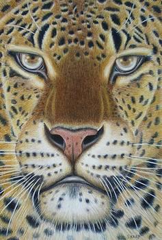 African Male Leopard by Karen Sharp