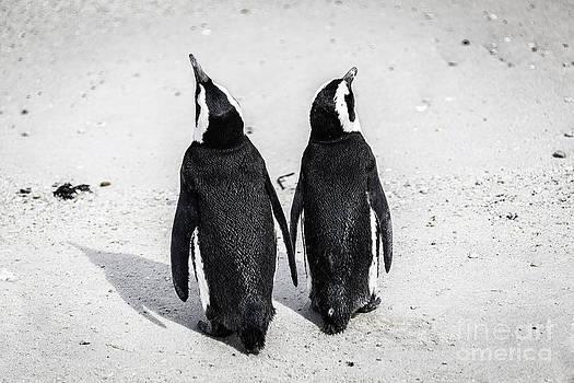 Katka Pruskova - African Penguins