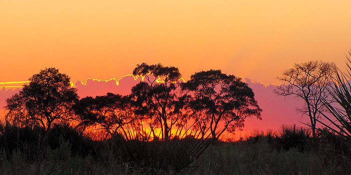 African Sunrise by Karen E Phillips