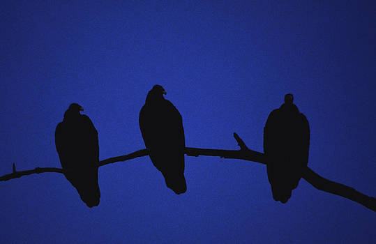 African Vultures in early nightfall. by Joe  Connors