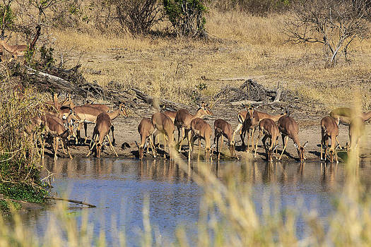 African Wildlife 0099 by Larry Roberson