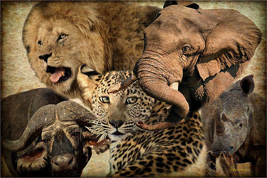 Africa's Big 5 by Judith Meintjes