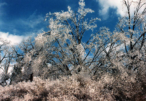 Linda Rae Cuthbertson - After the Ice Storm - Trees Heavy with Ice and a Deep Blue Sky