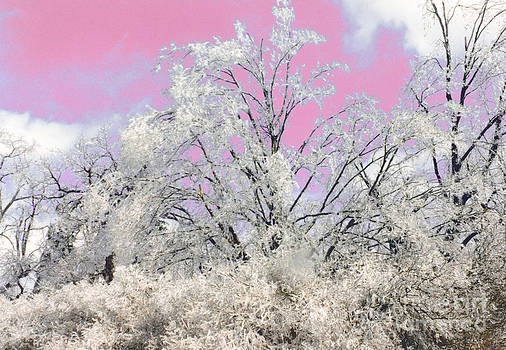 Linda Rae Cuthbertson - After the Ice Storm - Trees Heavy with Ice and a Pink Sky