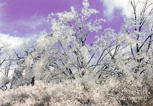 Linda Rae Cuthbertson - After the Ice Storm - Trees Heavy with Ice and a Purple Sky