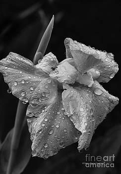 Deborah Benoit - After The Rain