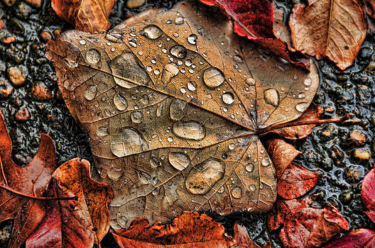 After the Rain by Jeff R Clow