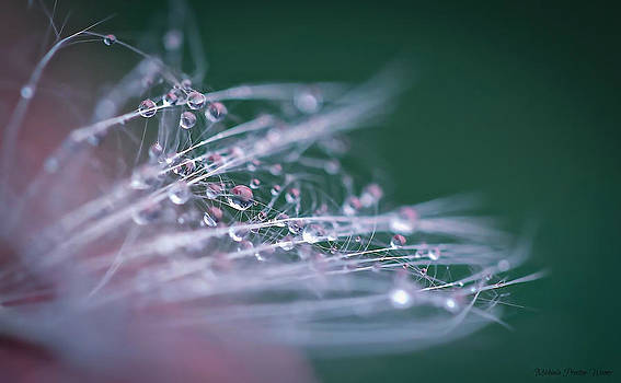 After the Rain by Michaela Preston