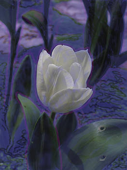 Afternoon tulip #1 by Marcia Cary
