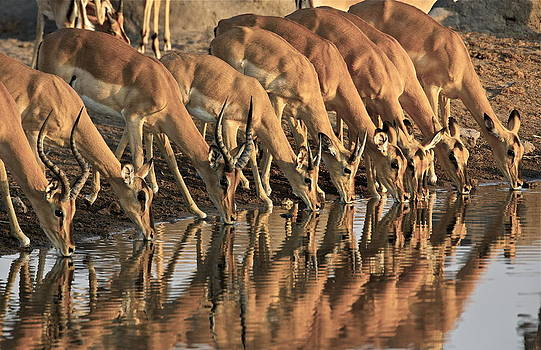 Afternoon Waterhole by Bruce Colin