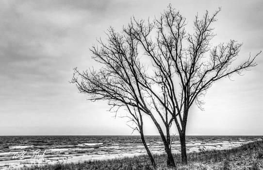William Reek - Against the Wind