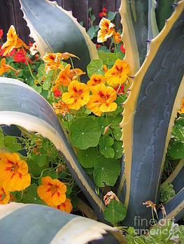 Agave and Nasturtiums by James B Toy