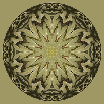 Agave Fantasy by Nancy Myer