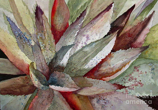 Agave In Three by Donlyn Arbuthnot