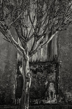 Aging process by Jonathan Wilkins