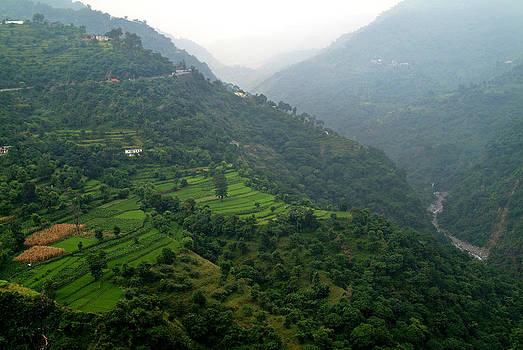 Devinder Sangha - Agriculture of Rice on Hills
