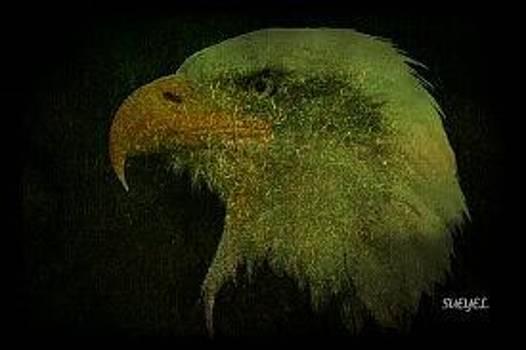 Sueyel Grace - Aguila