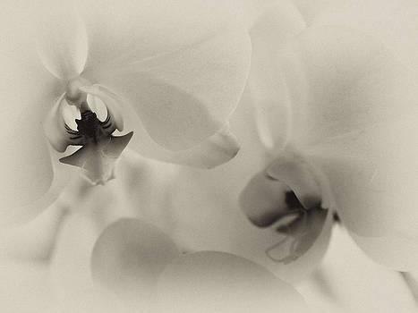 Ah Orchids by Maureen Cunningham
