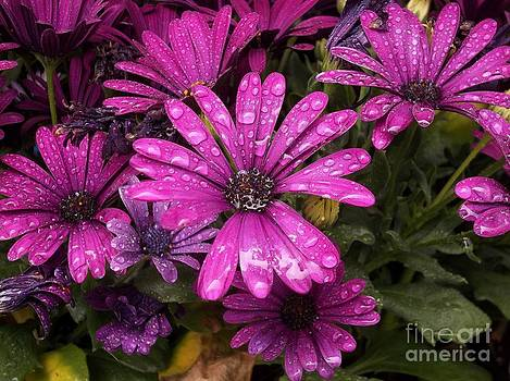 Ahh Stunning Beauty by Pamela Roberts-Aue