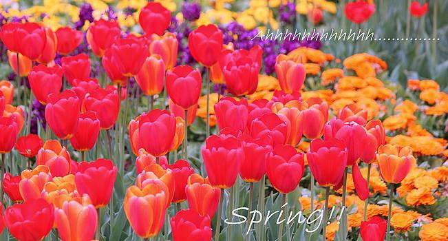 Rosanne Jordan - Ahhhhh  Spring