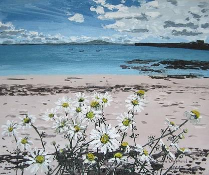 Aillebrack ballyconneelly Connemara Ireland by Diana Shephard