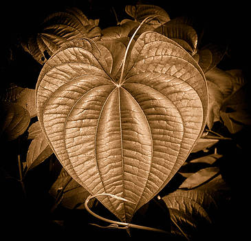 Christy Usilton - Air Potato Heart in Sepia