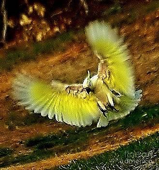Airborne Landing by Blair Stuart