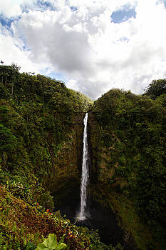 Akaka Falls by Lori Peterson