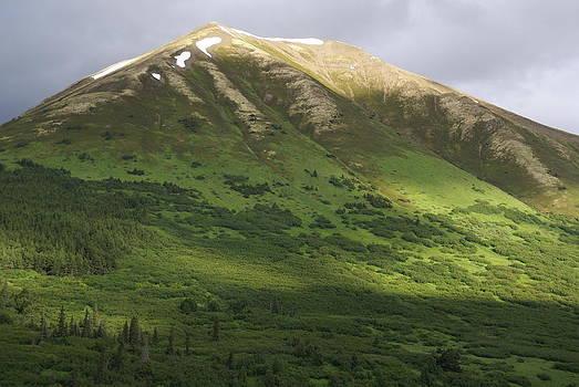 Patricia Twardzik - Alaska Natural Lighting