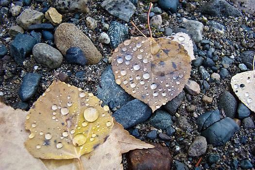 Dora Miller - Alaska Rainy Fall 2