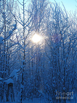 Alaska Sunrise Illuminating Through Birches and Willows by Elizabeth Stedman