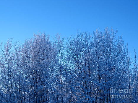 Alaska Sunrise Lighting Willows In Winter by Elizabeth Stedman