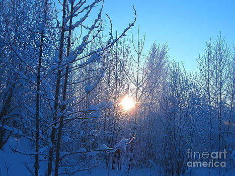 Alaska Sunrise Shining Through Birches And Willows by Elizabeth Stedman