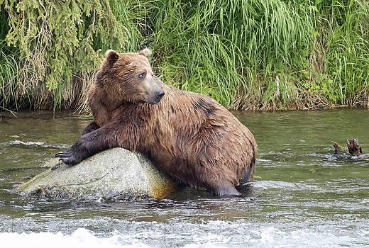 Dee Carpenter - Alaskan Grizzly