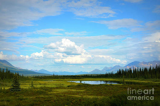 Alaskan Splendor by Kiana Carr