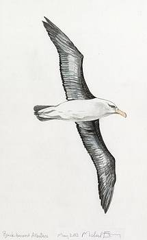 Michael Earney - Albatross
