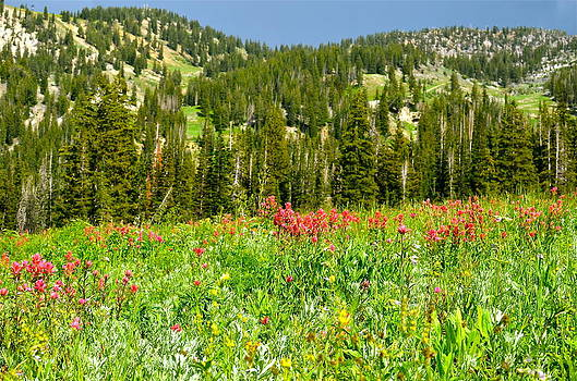 Albion Basin Wildflowers by Louise Morgan