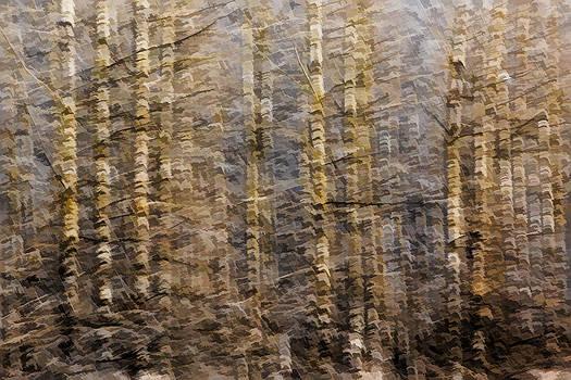 Alders in Winter by Phil Dyer